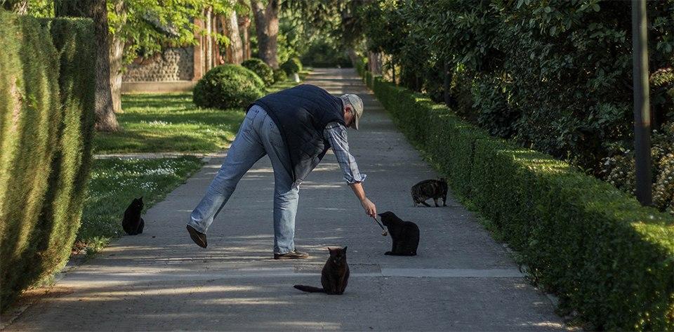 dokarmianie kotów